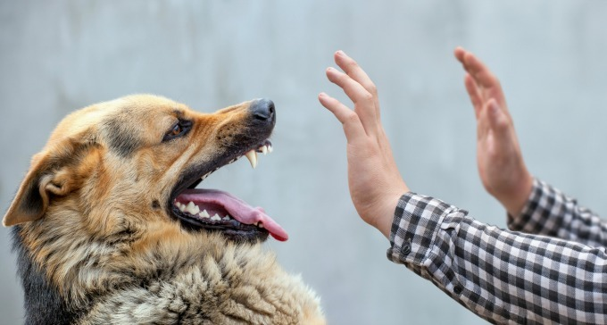 If the person harmed by your dog needs reconstructive surgery and / or rehabilitation, you could be looking at an very large claim. But once you exceed the limits on your homeowners insurance, your umbrella insurance will kick in, helping protect your assets.