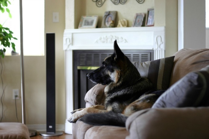 Dogs may deter burglars because they're unpredictable. Whether a dog is typically friendly with people or not, it's not a given that he'll be friendly to someone entering your home that doesn't belong there. Many burglars will pick an easier target.